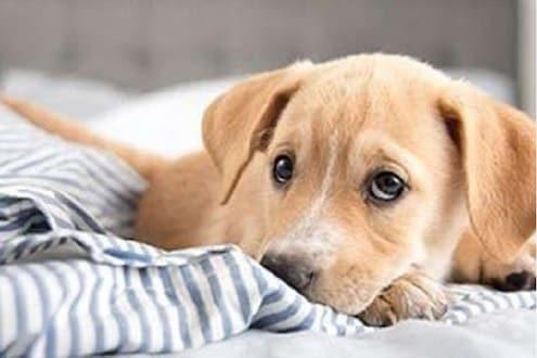 डोकं सुन्न करणारी बातमी; कुत्र्यावरच केला बलात्कार; CCTVमुळे उघड झाले दुष्कृत्य