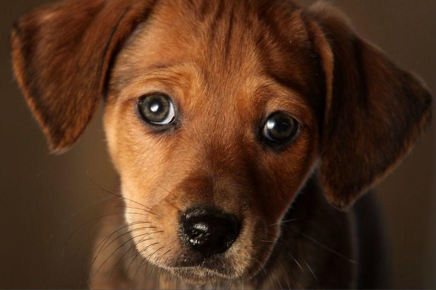 जर तुम्ही कुठे फिरायला जात असाल आणि तुम्ही फिरायला जाण्यापूर्वी तुमचा कुत्रा भूंकायला आणि गुरगुरायला लागला तर समजून जा की तुमचं आर्थिक नुकसान होऊ शकतं.