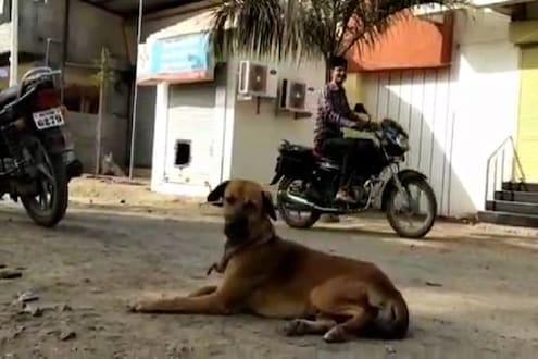 कुत्रा धावला आणि दरोडा फसला, बँकेचे वाचले कोट्यवधी रुपये