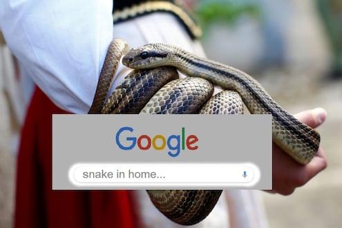 घरात साप शिरताच घेतली गुगलची मदत, व्यापाऱ्याला हजारो रुपयांचा गंडा