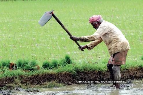 राज्यातील हजारो शेतकऱ्यांना मिळाला दिलासा, केंद्र शासनाने दिला महत्त्वाचा निर्णय