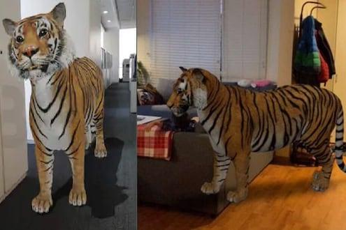 LockDown मध्ये घरात येतील वाघ-सिंह, जंगली प्राण्यांसोबत काढा मुलांचे PHOTO