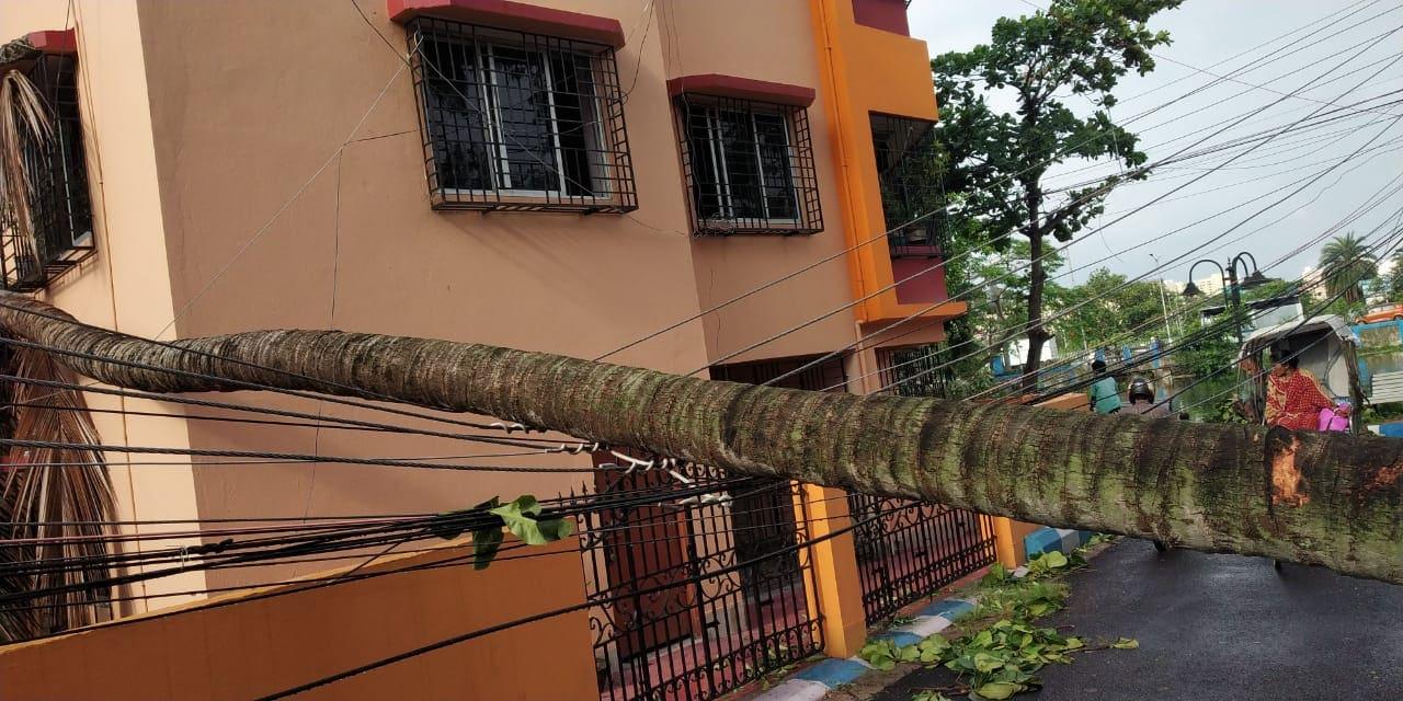 अनेक घरांचं झाडं पडून नुकसान झालं. वीज गेली, छप्पर उडाली.