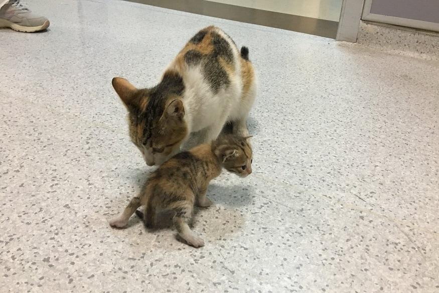 सध्या एक फोटो सोशल मीडियावर व्हायरल होत आहे. त्यात एक मांजरीन तिच्या पिल्लाला तोंडात धरून दवाखान्यात पोहोचल्याचं दिसत आहे.