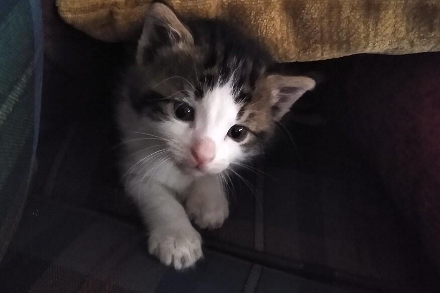 तिथल्या स्टाफने मांजरीनीला खायला दिलं. त्यानंतर दुधही दिलं. तिच्या पिल्लाला उपचारासाठी स्टाफ घेऊन जातो.