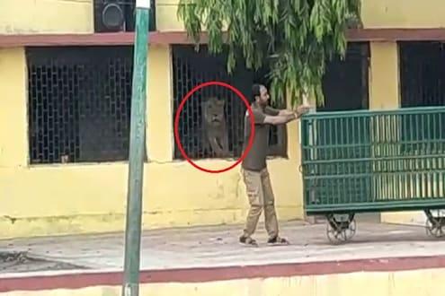 VIDEO : लॉकडाऊन असतानाही सरकारी शाळेत घुसला सिंह, डरकाळीने हादरलं अख्ख गाव!