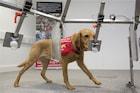 माणसानंतर आता कुत्र्यालाही कोरोना, आरोग्य विभागानं दिले मारून टाकण्याचे आदेश