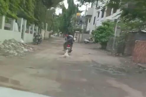 हत्तीच्या हत्येमुळे देश हादरला, औरंगाबादमधून आली कुत्र्याची संतापजनक घटना समोर, भयंकर VIDEO