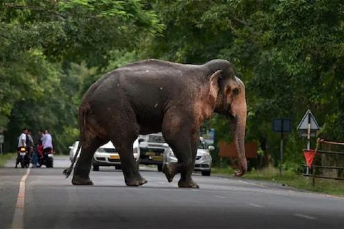 धक्कादायक! केरळमध्ये याआधी झाला आहे हत्तीणीचा फटाक्यांमुळे क्रूर मृत्यू