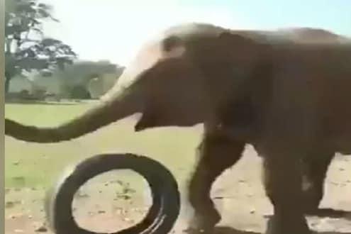 फूटबॉलसारखा हत्तीनं उडवला गाडीचा टायर, पुढे काय झालं पाहा VIDEO