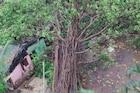 फक्त 60 सेकंदांमध्ये 10 घरांवर कोसळलं वडाचं झाड, पाहा थरारक Live Video