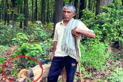 वाघापासून कुत्र्याला वाचवण्यासाठी शेतकऱ्यानं केला इंडियन जुगाड, पाहा PHOTO