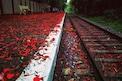 फोटो पाहून म्हणाल WOW! विश्वास बसणार नाही मात्र भारतातच आहे सुंदर रेल्वे स्टेशन