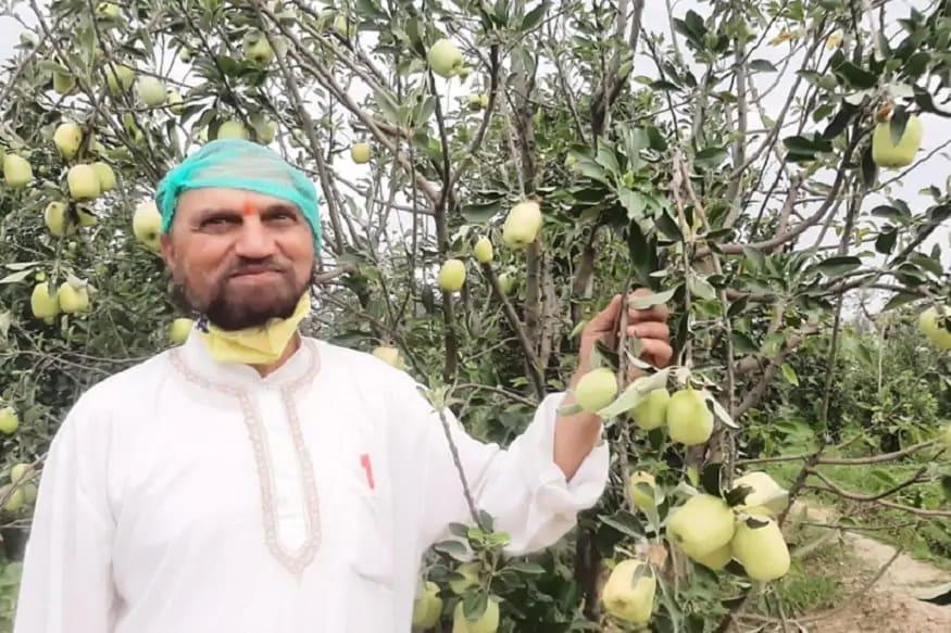 आता महाराष्ट्रातही होऊ शकते सफरचंदाची शेती, उष्ण वातावरणात येतं HRMN 99