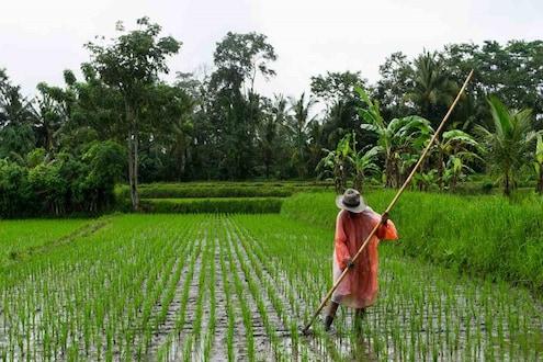 70 लाख शेतकऱ्यांना छोटीशी चूक पडली महागात! मिळाले नाहीत मोदी सरकारच्या या योजनेचे पैसे