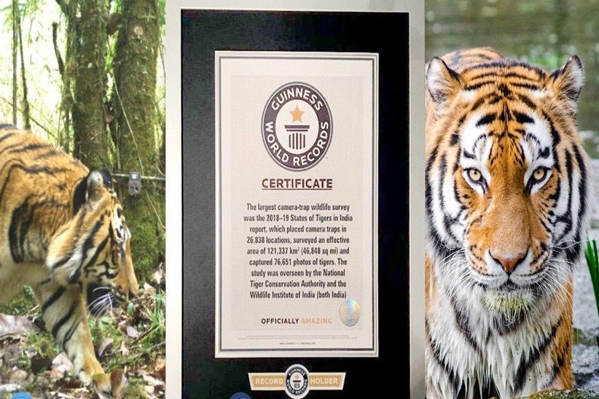 भारताच्या 2018 मधील वाघांच्या जनगणनेने गिनीज बुक ऑफ वर्ल्ड रेकॉर्डमध्ये नवा विक्रम नोंदवला आहे. (फोटो सौजन्य- Twitter @PrakashJavadekar)