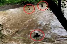 7 जण पुरामुळे नदीत अडकले, जीवाची बाजी लावून तरुणांनी वाचवलं; पाहा VIDEO