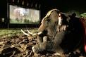 फक्त शरीर नाही बुद्धीनेही अफाट! हुशार हत्तींच्या माणसांसारख्या करामती एकदा पाहा