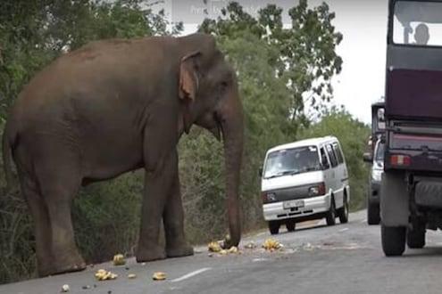 काय सांगता? इथे हत्तीला द्यावा लागतो टॅक्स...नेमका काय आहे प्रकार पाहा VIDEO