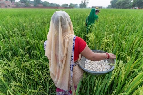 कृषी विधेयक 2020: किमान आधारभूत किंमत काय आहे ? आणि कोण ठरवतं ?