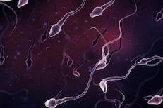 Sperm ची संख्या आणि गुणवत्ता वाढवण्यासाठी घरगुती उपाय