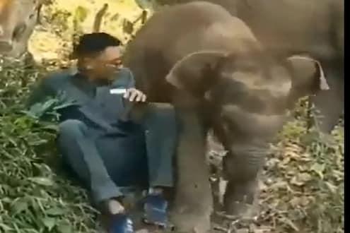 हत्तीच्या पिल्लानं तरुणाला का मारली लाथ? पाहा मजेशीर VIDEO