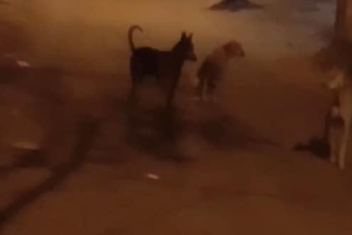 कुत्र्यांविरोधात तक्रार केली म्हणून श्वानप्रेमीने मागितली खंडणी, डोंबिवलीतील घटना