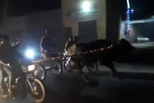 पैजेसाठी लावली शर्यत, भर ट्रॅफिकमध्ये सुसाट पळाल्या म्हशी, पाहा थरारक VIDEO