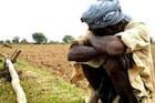 भिवंडीत या कारणामुळे भात पिकांचं मोठं नुकसान, शेतकऱ्यांचा आत्मदहनाचा इशारा