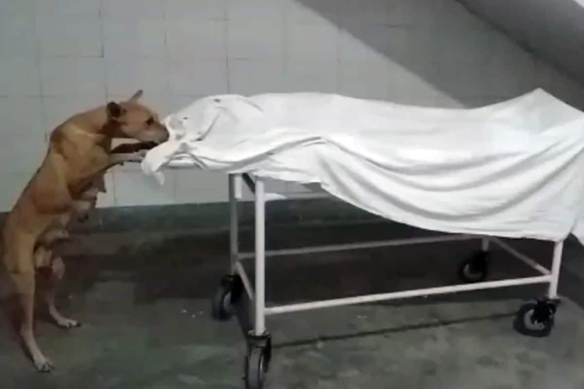 रुग्णालय परिसरात स्ट्रेचरवर ठेवलेल्या मुलीचा मृतदेह कुत्रा खात होता. हे हृदयविदारक दृष्य पाहून रुग्णालयातील लोकांना जबरदस्त धक्का बसला. काही लोकांनी मोबाईलवरून याचा व्हिडिओ बनवला. त्याचबरोबर सीएमओने या प्रकरणी त्वरित चौकशीचे आदेश दिले आहेत.