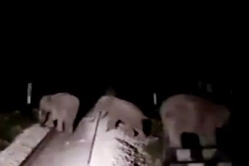 दैव बलवत्तर! अंधारात ट्रॅकवर फिरत होते हत्ती, मागून सुसाट ट्रेन आली पण... पाहा VIDEO