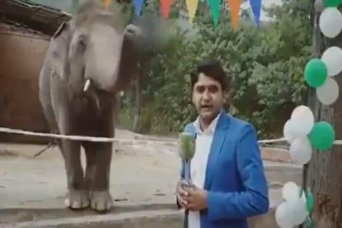OMG! LIVE शोमध्ये पत्रकार रिपोर्टिंग करत असताना हत्तीनं काय केलं पाहा VIDEO
