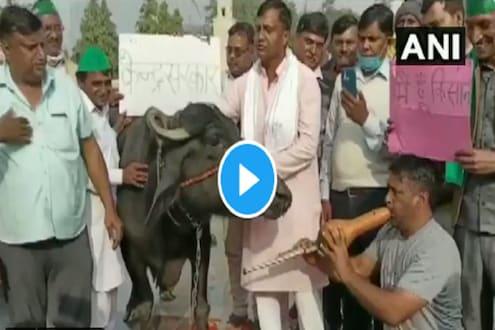 शेतकरी आंदोलनात या अनोख्या नागीण डान्सचा VIDEO VIRAL