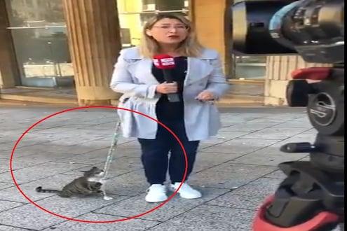 LIVE रिपोर्टिंगमध्ये आली मांजर आणि खेचायला लागली कोट, पाहा असा महिला रिपोर्टरचा VIDEO