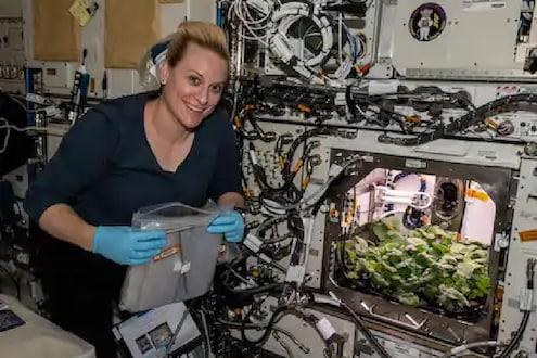 नासाची नवी भरारी : अंतराळात पिकवला मुळा!