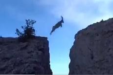 ओ तेरी! एका उडीतच बकऱ्यांनी पार केला डोंगर;  VIDEO पाहून तुम्हीही थक्क व्हाल