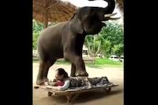 OMG! महिलेनं चक्क हत्तीकडून करून घेतला मसाज; पाठीवर पाय ठेवला आणि... VIDEO VIRAL
