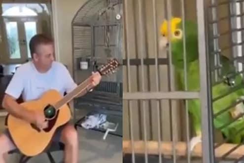 मालकानं वाजवली गिटार, पोपटानं गायलं गाणं; हा VIDEO पाहून म्हणाल 'व्वा उस्ताद, क्या बात है!'