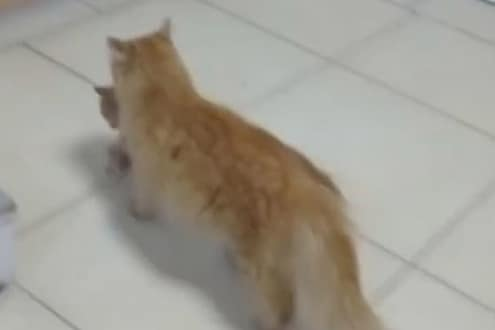 VIDEO - पिल्लाचा एक डोळा उघडेना म्हणून आईची धडपड; मांजरीने थेट गाठलं hospital