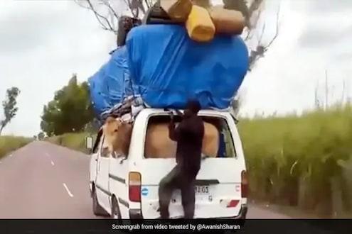 प्रवासाचा सॉलिड जुगाड! गाय गाडीत आणि गाडीबाहेर लटकत होता तरुण; VIDEO पाहून थक्क व्हाल
