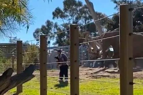 फोटो काढणाऱ्या बापलेकीला पाहून पिसाळला हत्ती; मागून आला आणि... धक्कादायक VIDEO VIRAL