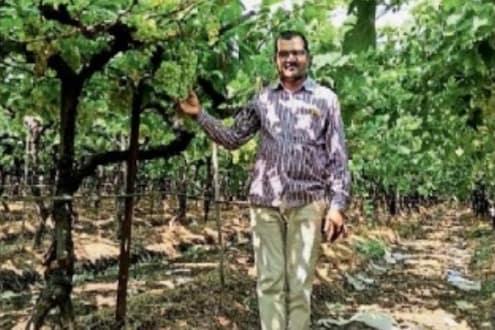 Beed News: बीडच्या शेतकऱ्याची परदेशात कमाल! द्राक्षं पोहचली थेट युरोपच्या बाजारपेठेत