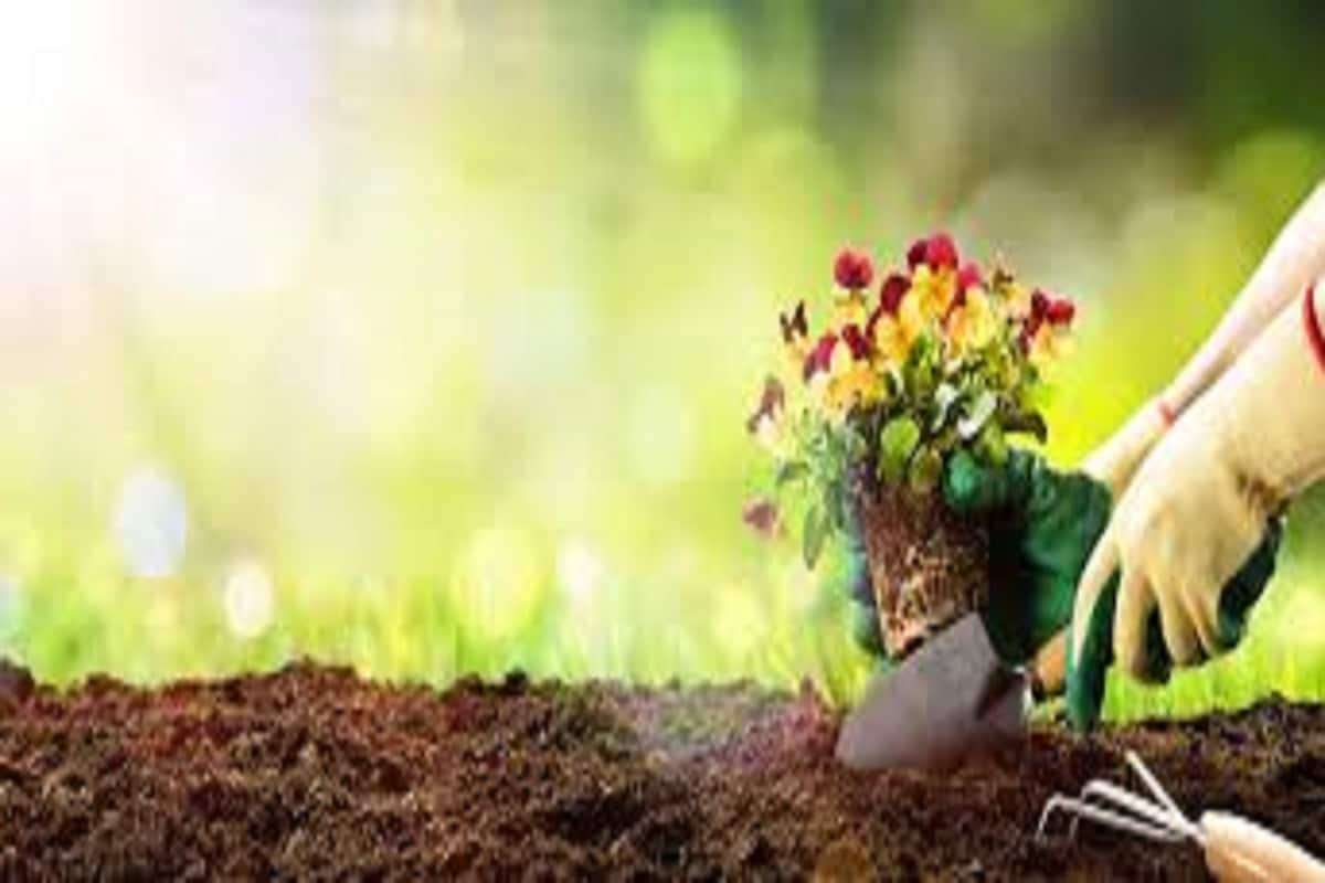 घरी बाग- घरीच उपलब्ध असलेल्या जागेत एक छोटीशी बाग तयार करा. त्यामध्ये वेगवेगळ्या फळभाज्यांची किंवा फुलांची लागवड करा.