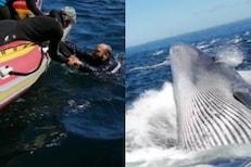 OMG! बोटीतून समुद्रात पडला तो थेट Whale च्या जबड्याजवळ; पुढे काय घडलं पाहा VIDEO