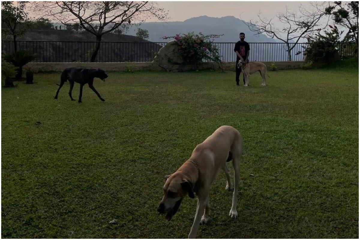 केएल राहुलने शस्त्रक्रियनेनंतर त्याच्या सोशल मीडिया अकाऊंटवरून एक फोटो शेयर केला आहे. दुखापत बरी होत असल्याचं कॅप्शन त्याने या फोटोला दिलं आहे. या फोटोमध्ये केएल राहुल त्याच्या कुत्र्यासोबत फिरताना दिसत आहे. (KL Rahul/Instagram)