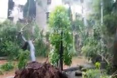 Cyclone Tauktae: मुंबई हवामान केंद्रालाही चक्रीवादळाचा फटका; झाडांची पडझड
