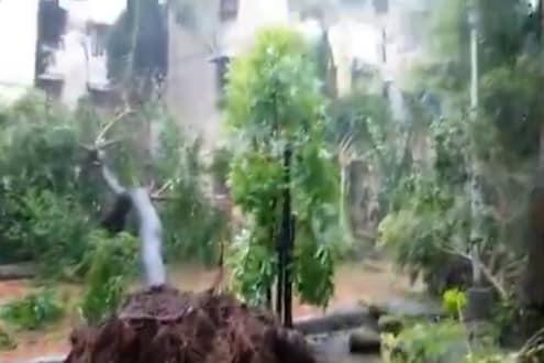 Cyclone Tauktae: मुंबई हवामान केंद्रालाही चक्रीवादळाचा तडाखा, झाडे उन्मळून पडली, पाहा VIDEO