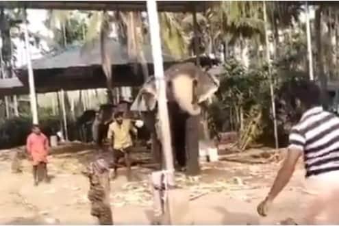 इंटरनॅशनल क्रिकेटरांनाही या हत्तीची दहशत; VIDEO मध्ये पाहा गन्नुप्रेमचा सॉलिड गेम!