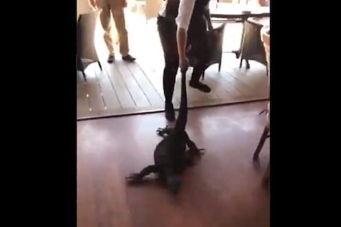 VIDEO - हॉटेलमध्ये घुसली भलीमोठी पाल; महिला वेटरने जे केलं ते पाहून अंगावर येईल काटा