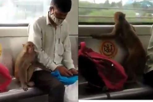 काय सांगता! माकडानं केला मेट्रोनं प्रवास; मोफत सवारीचा आनंद लुटतानाचा VIDEO VIRAL